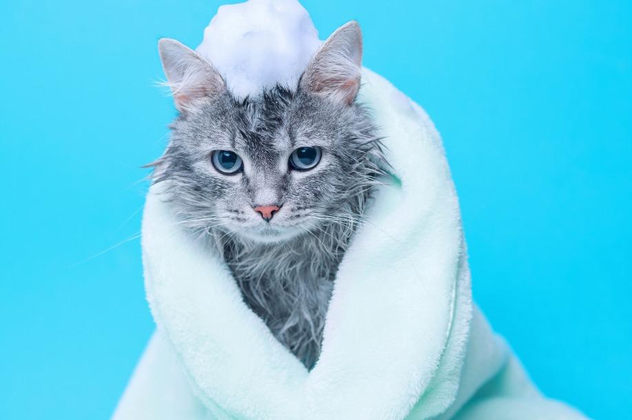 El baño, una mejor experiencia para los felinos