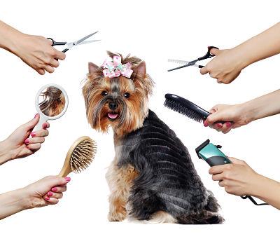 """12 consejos para convertirse en un peluquero """"más ecológico"""""""